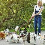 The Benefits Of Pet Boarding For Your Furry Friend